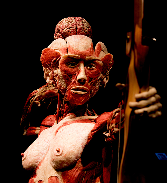 Gunther von Hagens' BODY WORLDS, Institute for Plastination, Heidelberg, Germany, www.bodyworlds.com