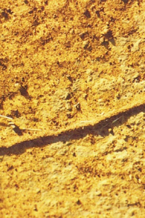 Ant track