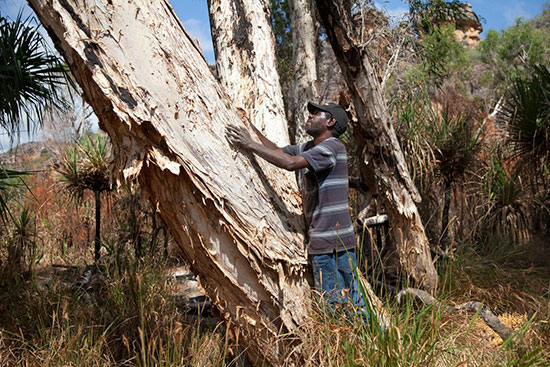 Isaiah Nagurrgurrba gathers paperbark to wrap the bones